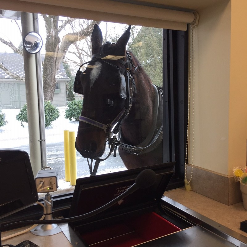 Horse at the bank drive-through